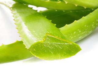Aloe Vera Blätter