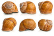 Snail shell with clipping paths