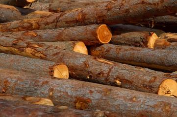 Dump timber