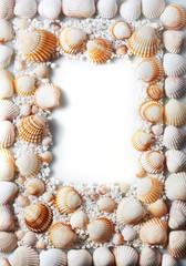 border summer shells frame