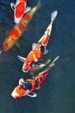 Fototapete Tier - Animals - Fische