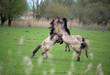 Fototapeten,pferd,pferd,tier,säugetier