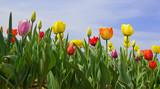 Fototapete Frühling - Hübsch - Hintergrund