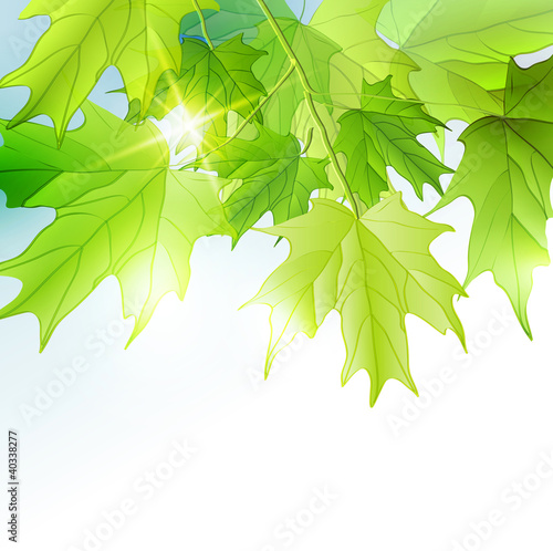Fresh green leaves vector background.