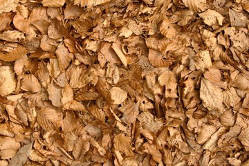 sfondo di foglie