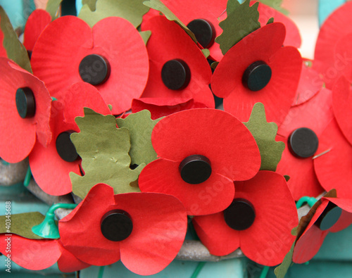 A Collection of Remembrance Day Red Poppys.