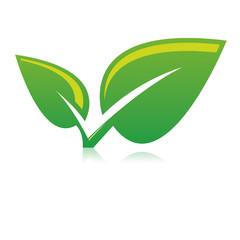 Plante verdoyante