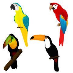 Parrots and tukans, birds of Africa