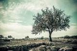 Fototapety Tree Vintage Style