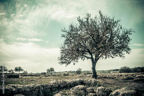 styl-vintage-drzewa