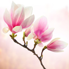 magnolia decoration