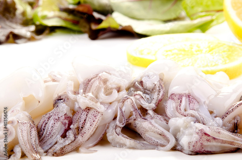 fresh squid before preparing as food