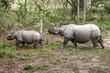 Wild Rhinoceros in Chitwan, Nepal