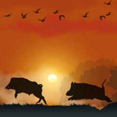 Faune - Sangliers au soleil couchant