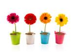 Fototapety Concept fleur