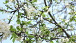 prune tree blossom