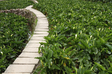Stone path through a lily meadow