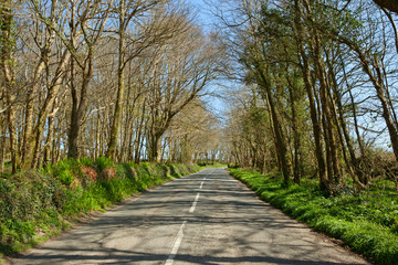 An English country road through trees, the B3315 in Cornwall.