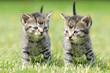 Fototapeten,katze,katze,kitty,welpe