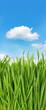 fresh green grass against idyllic blue sky