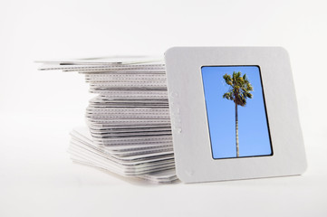 , with a photograph of a palm tree