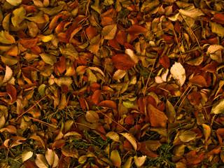 prato di foglie