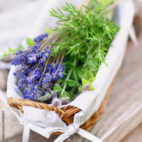 Kräuter, Lavendel