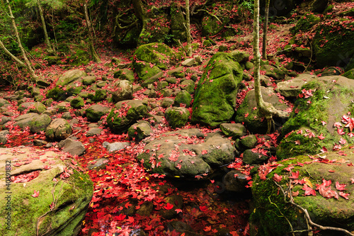 Red maple leaf during fall at Phukradung National Park