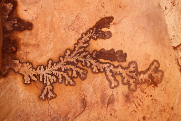 Fossilized plant on Sandstone gorge formation, Petra, Jordan