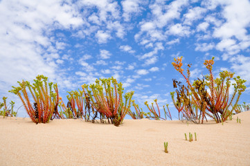 Sand dunes in Coorong National park, Southern Australia