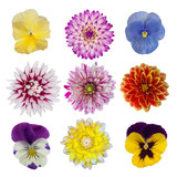 collection of dahlia daisies and pansies isolated on white backg