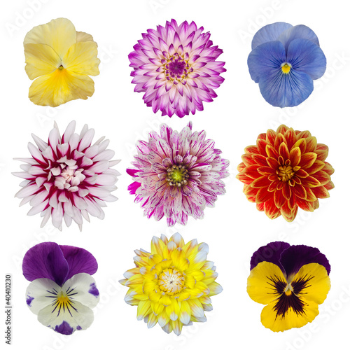 Fotobehang Dahlia collection of dahlia daisies and pansies isolated on white backg