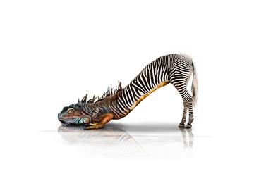 Zebraechse