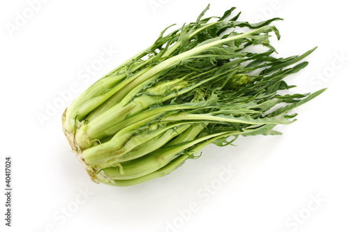 puntarelle, asparagus chicory, italian vegetable