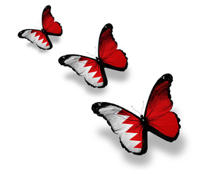 Three Bahraini flag butterflies, isolated on white