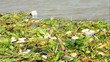 polluted River full of rubbish showing environment
