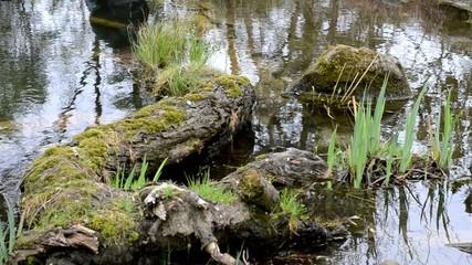 Wasser, Natur und beginnender Regen