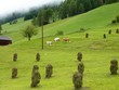 The VBillgraten valley in Austria with hay stacks on the fields
