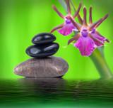 Steine und Orchidee