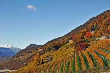 Vigneti dell'Alto Adige,  strada del vino - Renon