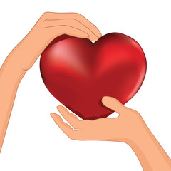 Person hold red heart in hand vector