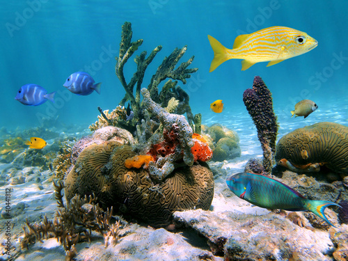 Leinwanddruck Bild Colorful marine life underwater in the Caribbean sea with coral, tropical fish and sponges, Mexico