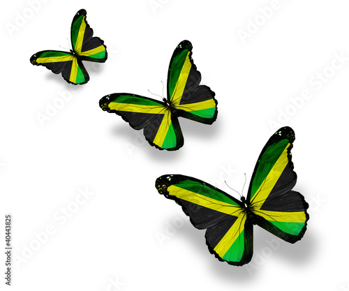 Three Jamaican flag butterflies, isolated on white
