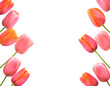 Pink tulips background and border floral design