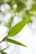 Grüne Blätter mit Wassertropfen 02
