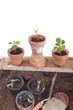 Studioaufnahme- Gartenarbeit - Setzlinge einpflanzen