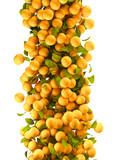 Fototapety orange fruits flying