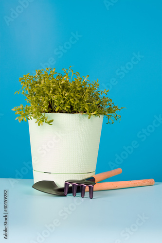 Watercress salad in a pot