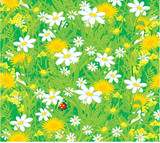 Background with a ladybug and field flowers