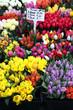 tulpen verkauf